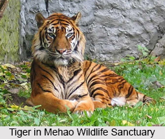 Mehao Wildlife Sanctuary, Arunachal Pradesh