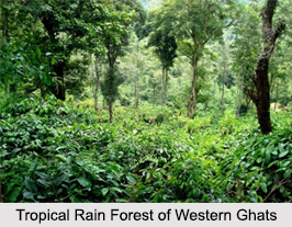 Indian Tropical Rain Forests