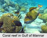Gulf of Mannar Marine National Park, Tamil Nadu