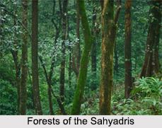 Sahyadris Mountain Range