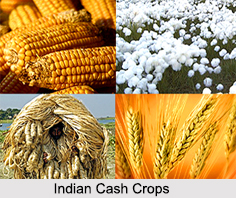 Indian Cash Crops