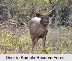 Kamala Reserve Forest, Arunachal Pradesh