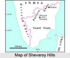Shevaroy Hills, Tamil Nadu