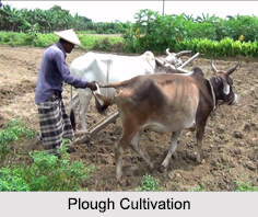 Plough Cultivation, North East India