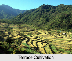 Terrace Cultivation, North East India