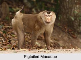 Borail Wildlife Sanctuary, Assam