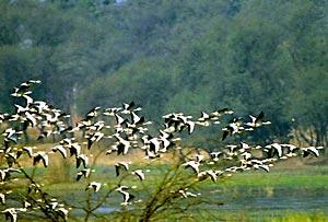Sultanpur Bird Sanctuary