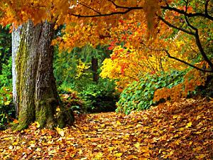 The Autumn - Sharat-Ritu, Indian Litterateur