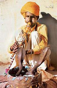Madari, Tribe Of Snake-Charmers