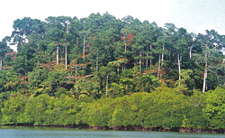Andaman Tropical  Forest