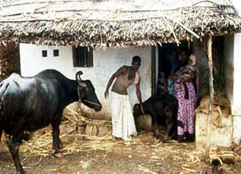 Livestock in India, Animal Husbandry in India