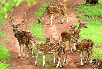 Kuno Wildlife Sanctuary - Badoda, Madhya Pradesh