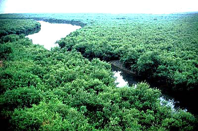 Sundarbans Mangrove - World's largest Mangrove