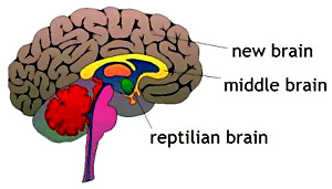 Reptilian or First Brain