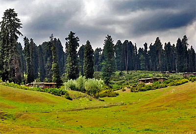 Flora and Fauna of Jammu & Kashmir