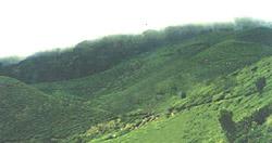 Bodinayakkanur - Billiard green hilltops