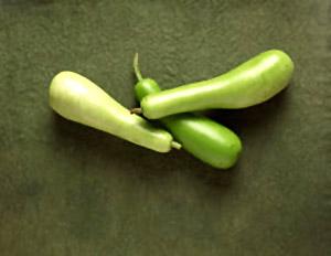 Vegetables bottlegourd