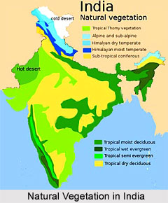 Natural vegetation in india for Soil zones of india