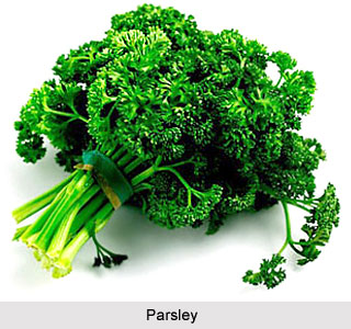 Image Result For How Much Parsley