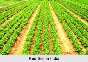 Red Soil in India