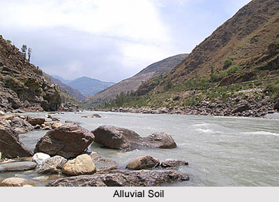 Alluvial Soil in India