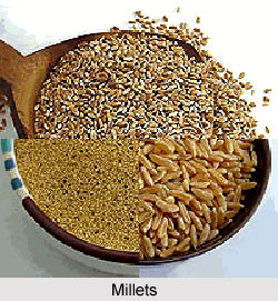 Millets, Indian Food Crop