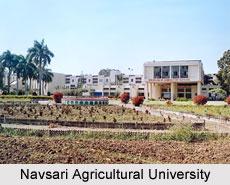 Navsari Agricultural University, Gujarat