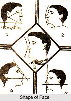 Study of Face Shape, Physiognomy