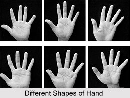 Classification of Hand Shapes , Indian Palmistry