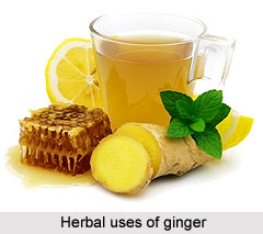 Herbal uses of Ginger