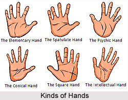 Kinds of Hands, Palmistry