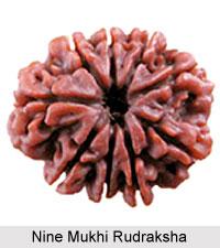 Nine Mukhi Rudraksha