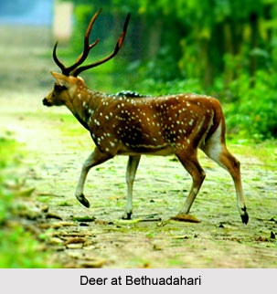 Bethuadahari Wildlife Sanctuary, West Bengal