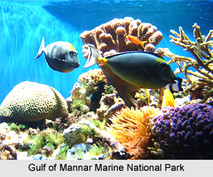 Gulf of Mannar Marine National Park, Tamil Nadu