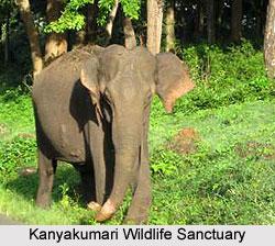 Kanyakumari Wildlife Sanctuary, Tamil Nadu
