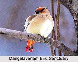Mangalavanam Bird Sanctuary, Kerala