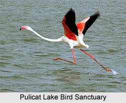 Pulicat Lake Bird Sanctuary, Tamil Nadu