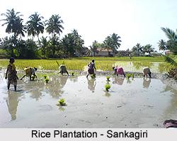 Sankagiri, Tamil Nadu