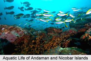 Adventure Tourism in Andaman and Nicobar Islands