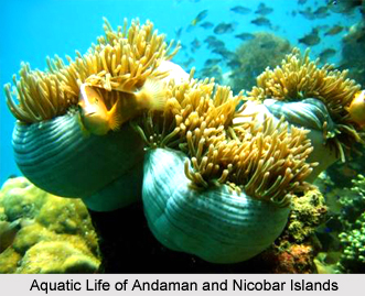 Leisure Tourism in Andaman and Nicobar Islands