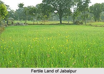 Agriculture of Madhya Pradesh