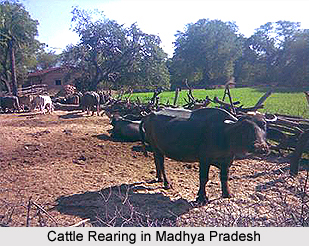 Cattle Farming in Madhya Pradesh