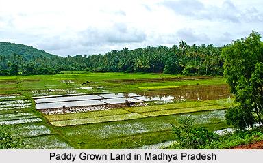 Crops of Madhya Pradesh