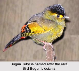 Bugun Tribe, Arunachal Pradesh
