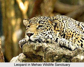 Wildlife of Arunachal Pradesh