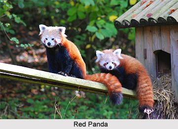 Wildlife of Arunachal ...