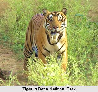 Betla National Park, Jharkhand