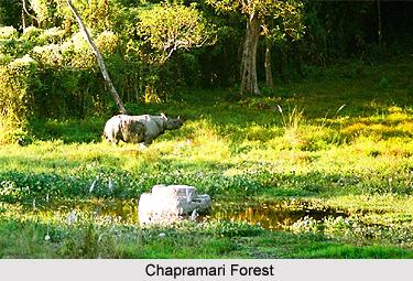 Chapramari Forest, West Bengal