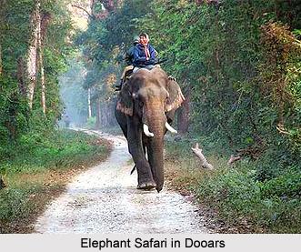 Dooars, West Bengal