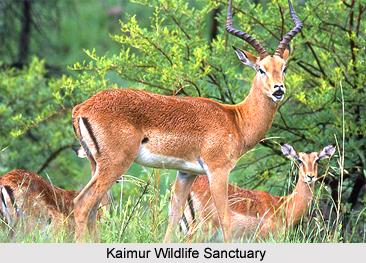 Kaimur Wildlife Sanctuary, Bihar